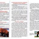 Власти Усинска рассказали, что делать при встрече с медведем